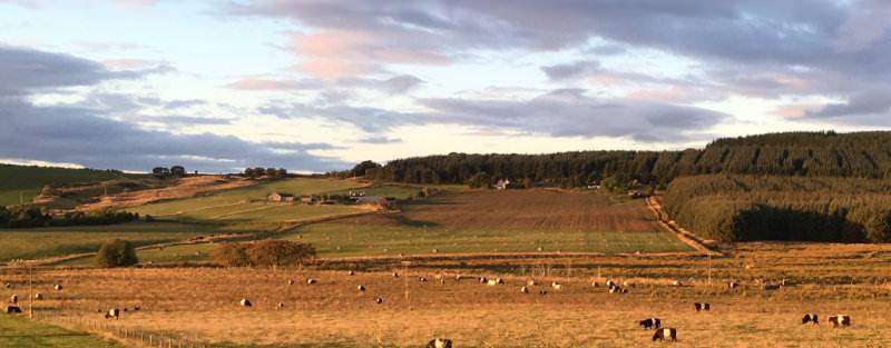 Wark Farm